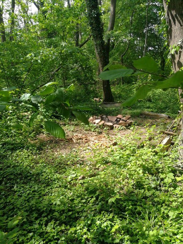 Feu de camp et Échange approfondi en forêt